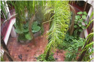 Courtyard Subtropical